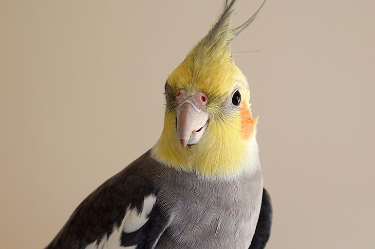 小鳥の病気